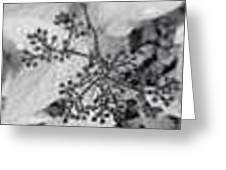 Buds In Black And White Greeting Card