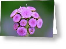 Buds In Purple Greeting Card