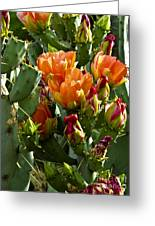 Buds N Blossoms Greeting Card