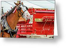 Budweiser Clydesdale In Full Dress Greeting Card