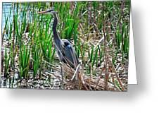 Bue Heron Greeting Card