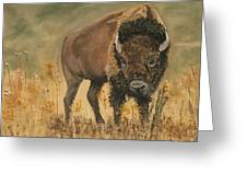 Buff Buffalo  Greeting Card