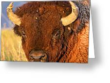 Buff In The Badlands Greeting Card