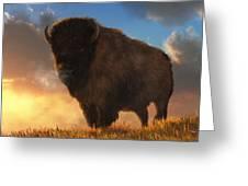 Buffalo At Dawn Greeting Card