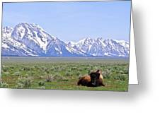 Buffalo At Rest Greeting Card