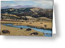 Buffalo By A Stream Greeting Card