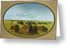 Buffalo Chase With Accidents Greeting Card