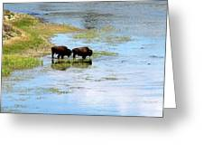 Buffalo Walk Greeting Card