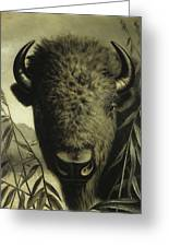 Buffalo Head Greeting Card