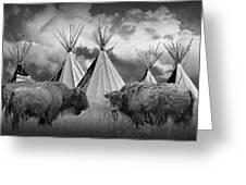 Buffalo Herd Among Teepees Of The Blackfoot Tribe Greeting Card