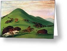 Buffalo Hunt, 1830s Greeting Card