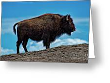 Buffalo In Profile Greeting Card