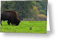 Buffalo In Spring Grass Greeting Card