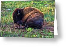 Buffalo In The Badlands Greeting Card