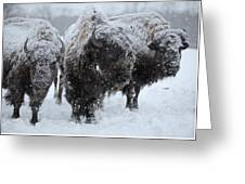 Buffalo In The Blowing Snow Greeting Card