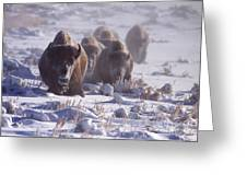 Buffalo In The Fog-signed-##6995 Greeting Card