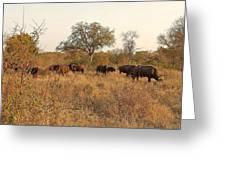 Buffalo In The Timbavati Greeting Card