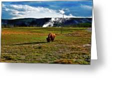 Buffalo In Yellowstone Greeting Card