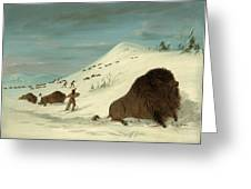 Buffalo Lancing In The Snow Drifts. Sioux Greeting Card
