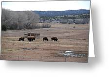 Buffalo New Mexico Greeting Card