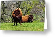 Buffalo Posing Greeting Card