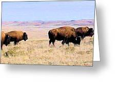 Buffalo Range In Kansas Greeting Card