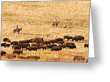 Buffalo Roundup Greeting Card