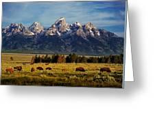 Buffalo Under Tetons 2 Greeting Card