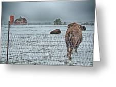 Buffalos In The Snow Greeting Card by Barry C Donovan