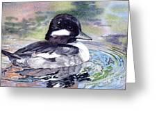 Bufflehead Duck Greeting Card