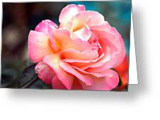 Buffum Rose Greeting Card