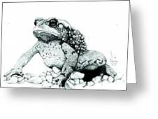 Bufo Americanus Greeting Card