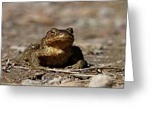 Bufo Bufo Greeting Card