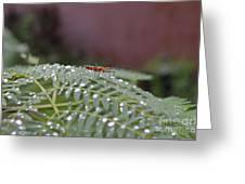 Bug Homestead Greeting Card