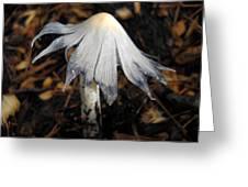 Bug On A Mushroom Greeting Card