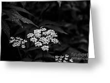 Bug On Flowers Black And White Greeting Card