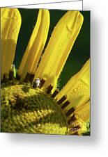 Bug On Yellow Sunflower Greeting Card