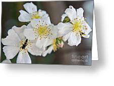 Bugaboo Apple Blossoms Greeting Card