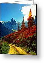 Bugaboos Evening Buzz Greeting Card
