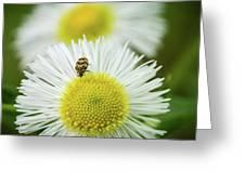 Bugged Flower Greeting Card