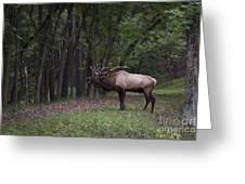 Bull Elk Bugle Greeting Card