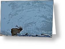 Bugling Bull Elk, Alberta Canada Greeting Card