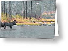 Bull And Cow Moose In East Rosebud Lake Montana Greeting Card