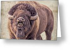Bull Bison Greeting Card