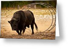 Bull Dust Greeting Card