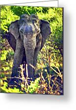 Bull Elephant Threat Greeting Card