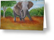 Bull Elephant Greeting Card