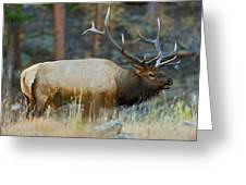 Bull Elk 6x6 Greeting Card