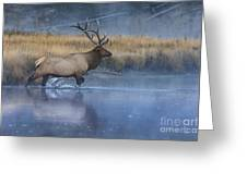 Bull Elk Crossing The Madison River Greeting Card