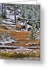 Bull Elk Feeding In Winter Greeting Card